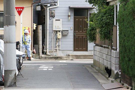 江戸川区のねこ