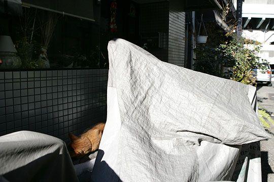 東京のねこ